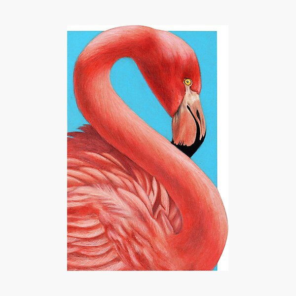 Flamingo art by Wildlife Artist Sherrie Spencer Photographic Print