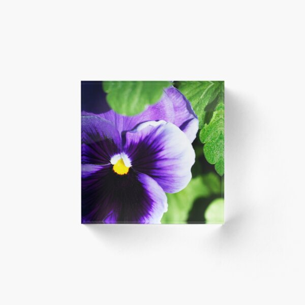 Perky Purple Pansy Acrylic Block