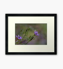 Twining Fringe Lily (Thysanotus patersonii) Framed Print