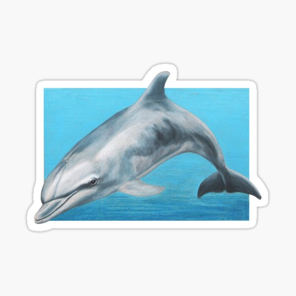 Dolphin art by Wildlife Artist Sherrie Spencer Sticker