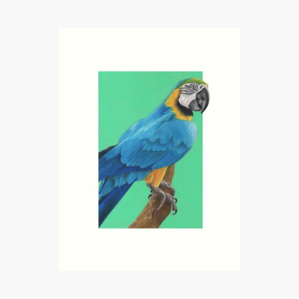 Blue and Gold Macaw art by Wildlife Artist Sherrie Spencer Art Print