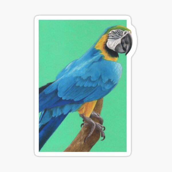 Blue and Gold Macaw art by Wildlife Artist Sherrie Spencer Sticker