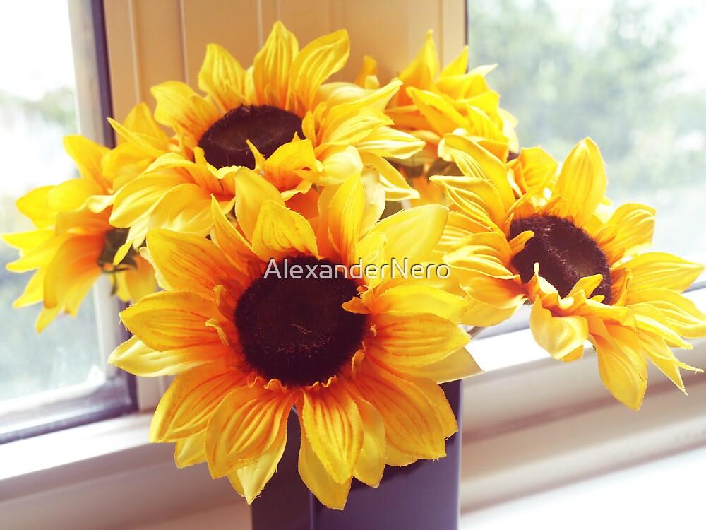 Sunny by AlexanderNero