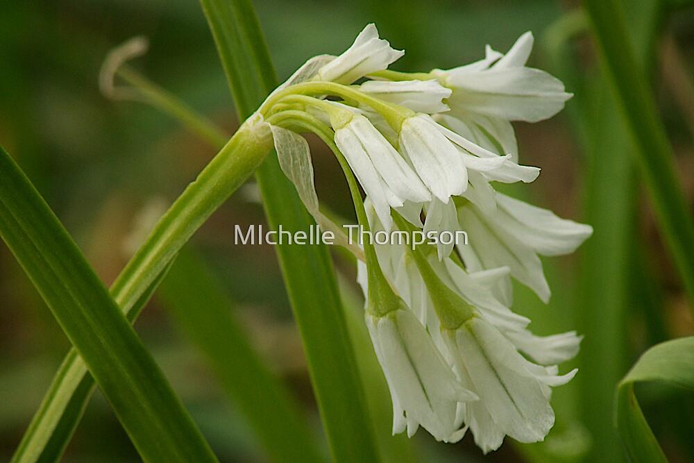 Wildflower, Buckleys Lane by MIchelle Thompson