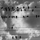 Pigeons 2 by Jack  Preston