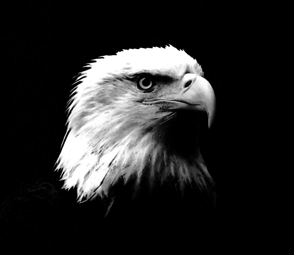 Black & White American Bald Eagle by madeinatlantis