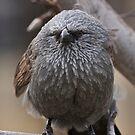 Apostle Bird by tarnyacox