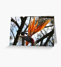 United Colours of Nature  Greeting Card