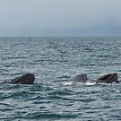 Baleen Whale by SusanAdey