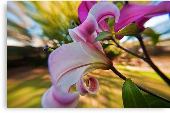 Pink Lilium in the garden by Jaxybelle