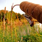 Hello There - Pecan Grove Park, Sherman, Texas, USA by aprilann