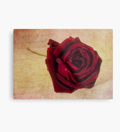 Papa Meilland......A red red rose.. Metal Print