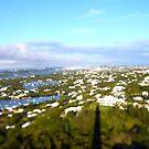 Beautiful Bermuda by dgscotland