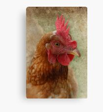 A Happy Chook Canvas Print