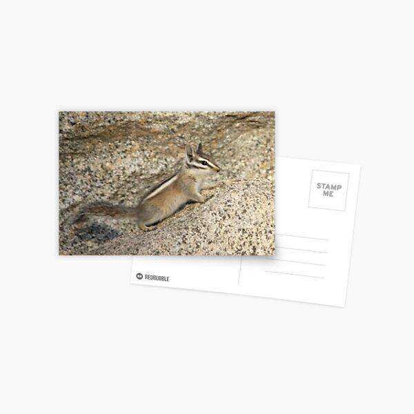 Chipmunk rock Postcard