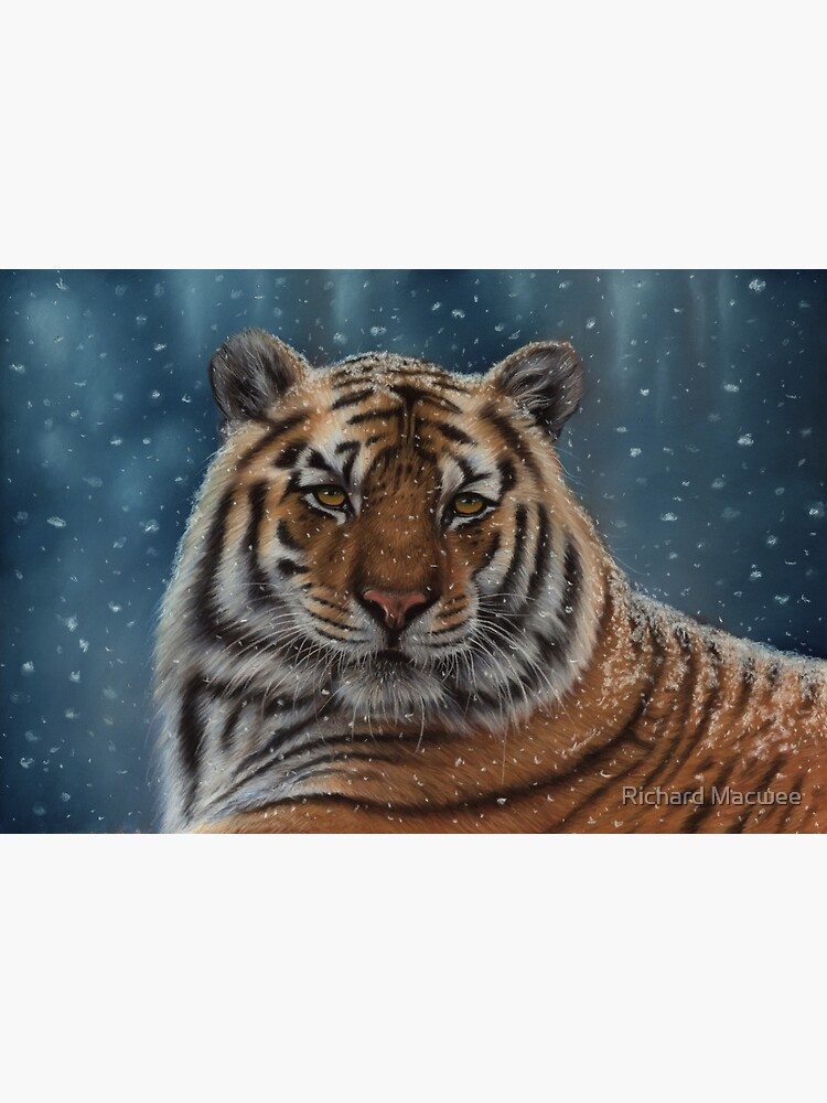 Tiger in the Snow by richardmacwee
