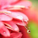 rain drops keep falling on my...flower by Kendal Dockery