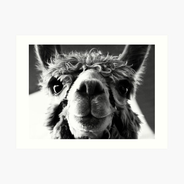 Say Cheese and Smile Pretty! Art Print
