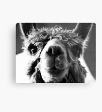 Say Cheese and Smile Pretty! Metal Print