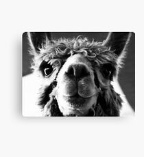 Say Cheese and Smile Pretty! Canvas Print