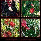 Scarlet Honeyeater Montage by Odille Esmonde-Morgan
