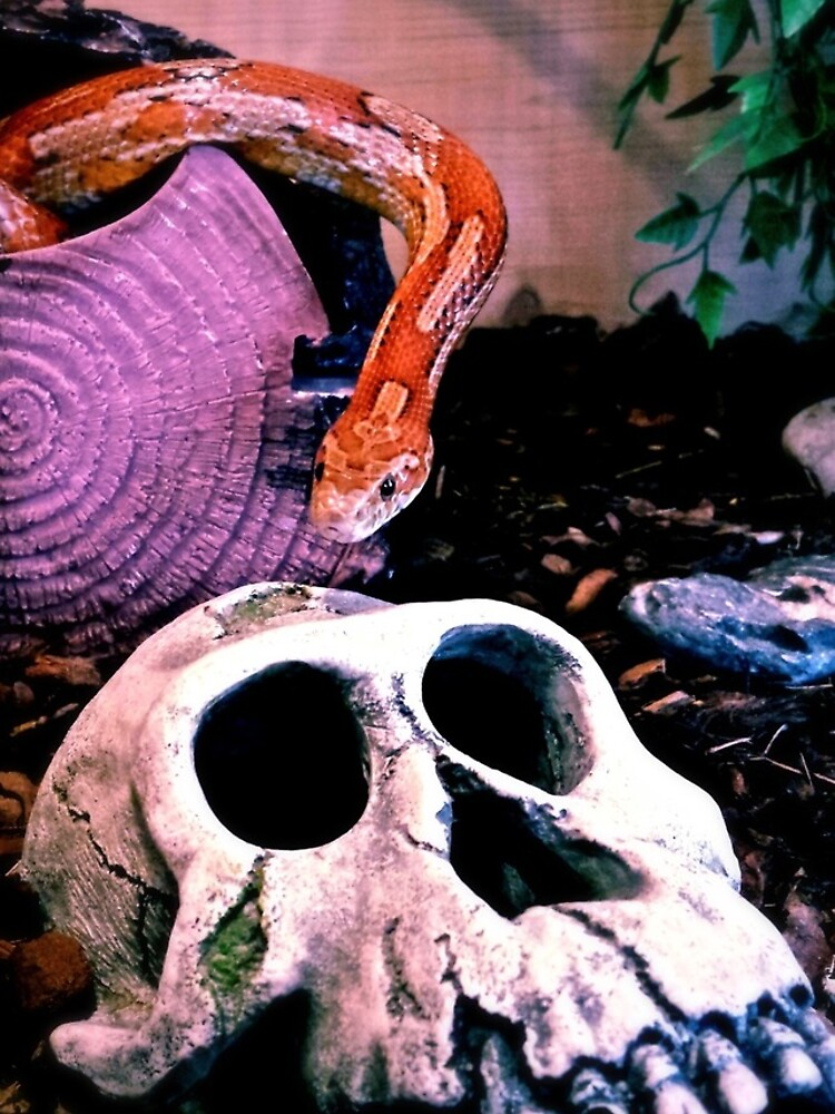 Snake or Skull von churer