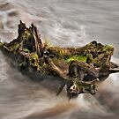 Life on the log by Phillip Dove