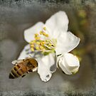 Buzzing for Spring by Belinda Osgood