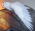 Birdie Boy - Cathedral of Light by Jaeda DeWalt