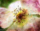 Apple blossom time by © Pauline Wherrell