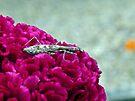 Praying Mantis on Cockcomb by FrankieCat