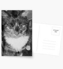"""Im so fluffy! Im so fluffy!"" Postcards"