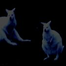 THE EVIL WALLABIES! by LadyWendyAnnie