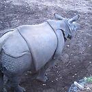 Mr Rhino by LadyWendyAnnie