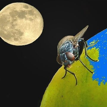 Fly by Night by lindabeth
