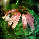 Coneflower With Textures by teresa731