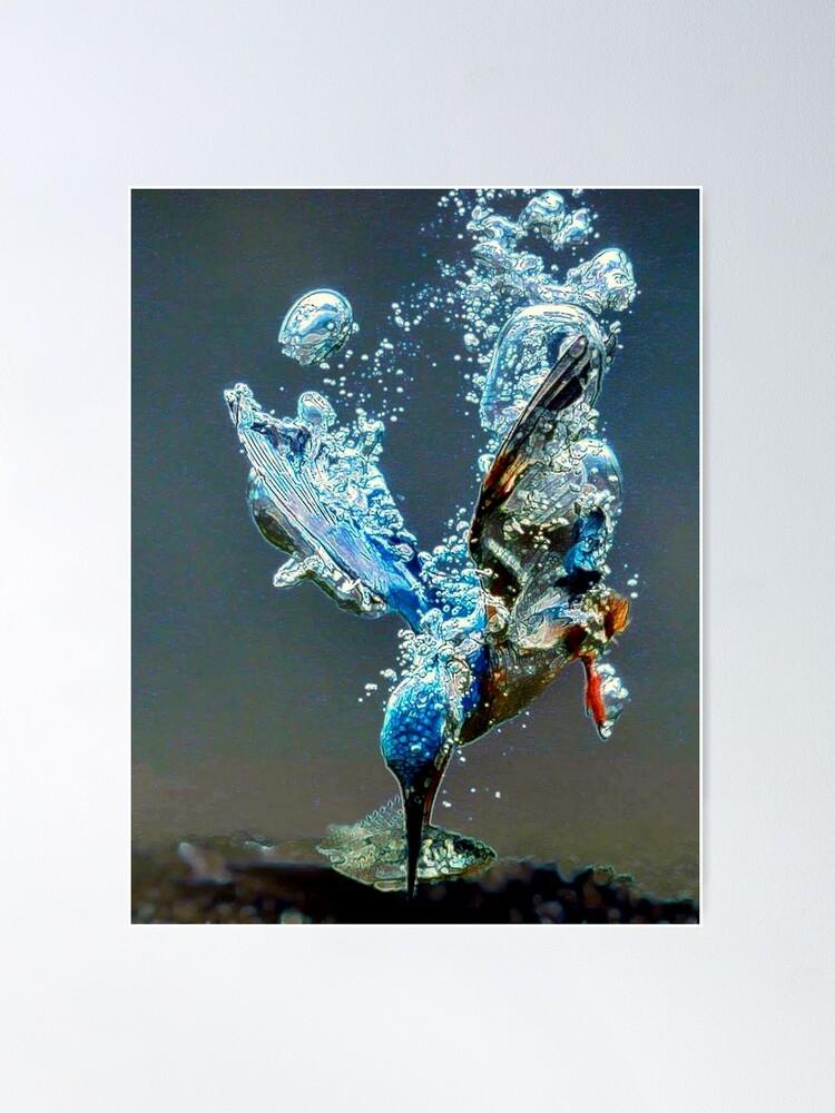 Alternate view of Diving bird Poster