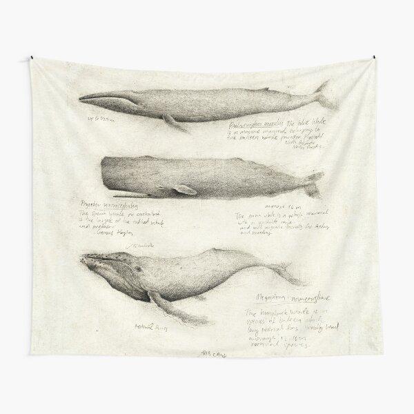 Marine Animal - Postcard Leonardo DaVinci Type Sketch Blue Whale Information