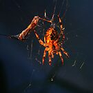The Spider and It's Victim by Jonice