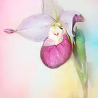 Cotton Candy Orchid by KBritt