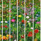 Wilderness of Wildflowers  by jennyjeffries