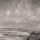 Wallabi  by Conor  O'Neill