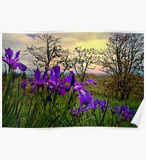 Wild Beauty ~ Wild Iris ~ Poster