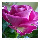 Kingsbury Rose by technochick