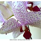 Adele's Orchid by technochick