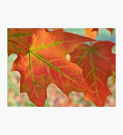 Hello Fall Photographic Print