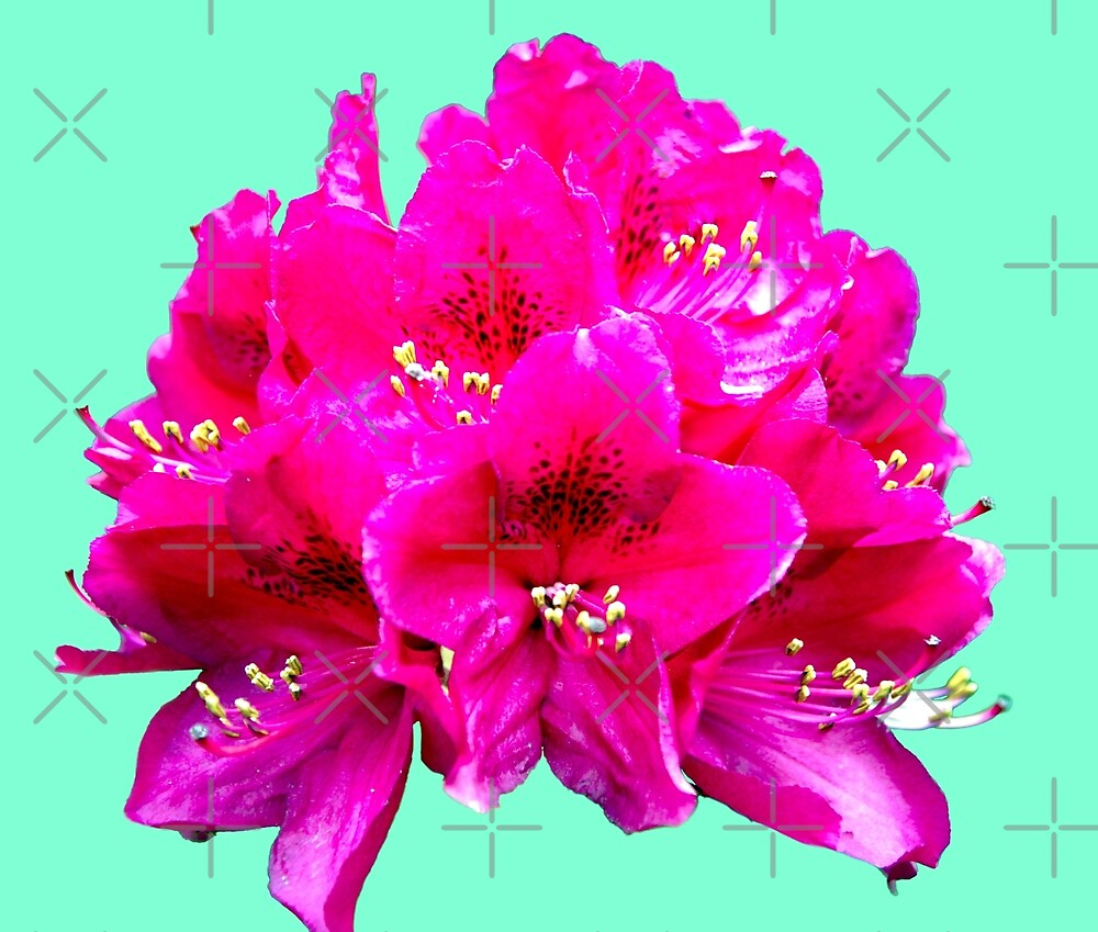 Rhododendron on an aqua menthe background by SiobhanFraser