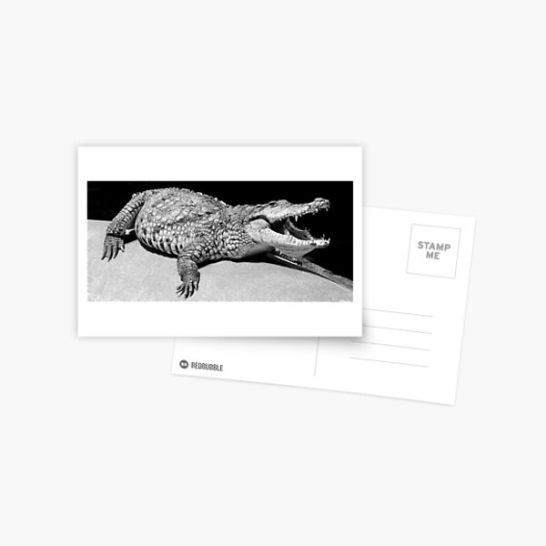 Aligator in Dublin Zoo Postcard
