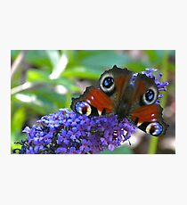Butterfly - Schmetterling Photographic Print