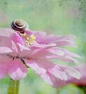 Snail on Petals  by Elaine Manley